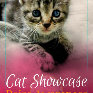 Cat Showcase - Raise Awareness with Cotopaxi - Anna Can Do It!