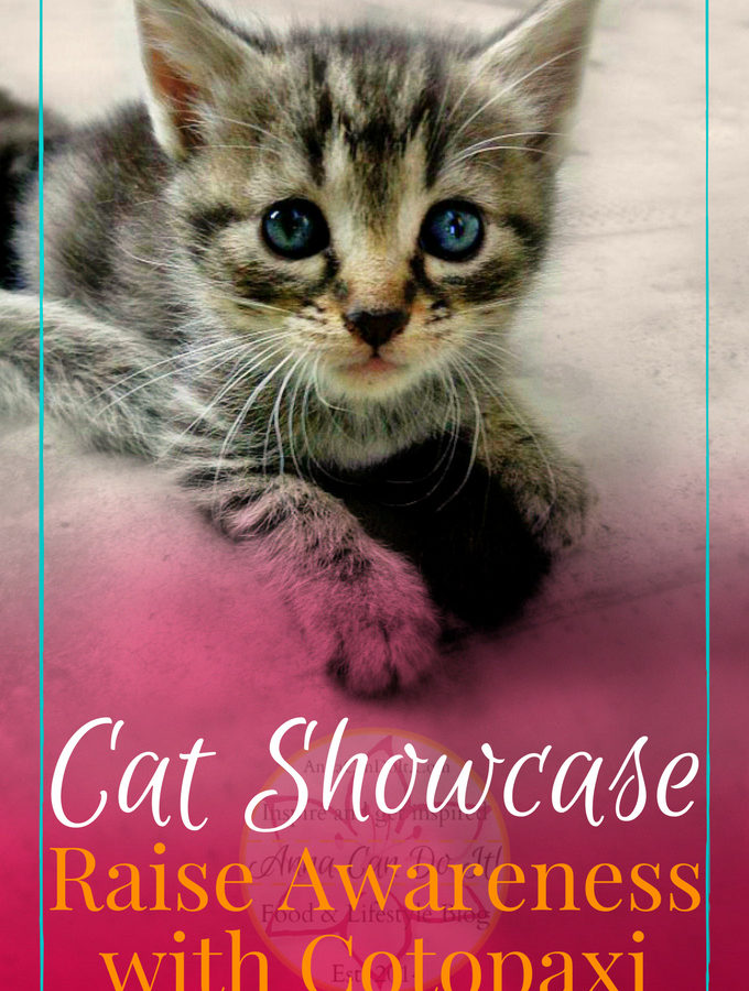 Cat Showcase – Raise Awareness with Cotopaxi
